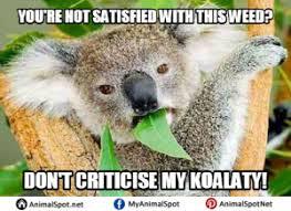 Koala Meme - index of wp content uploads 2017 04