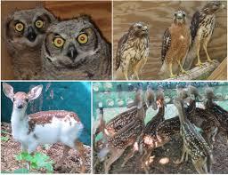 South Carolina wild animals images Paws animal wildlife sanctuary jpg