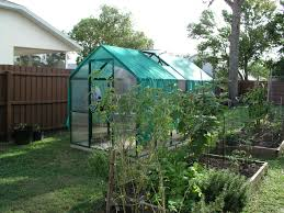 florida backyard vegetable gardener growin u0027 crazy acres