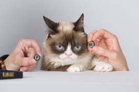 Grumpy Cat Has Died Youtube - videocracy review 13 years of youtube and we still don t know what