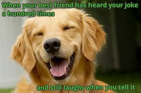 Cute Dog Memes - wholesome cute dog memes to brighten your tuesday album on imgur