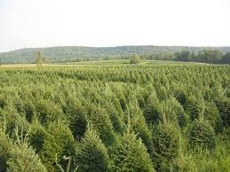 evergreens chuck hafner u0027s garden center syracuse
