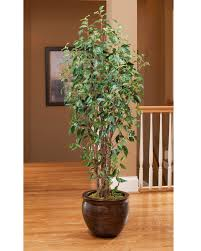 shop for high quality silk ficus trees for home or office
