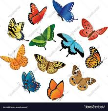 top flying butterfly vector cdr free clip designs icons