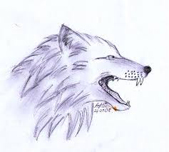 wolf head snarling sketch by quietfawn skywolf on deviantart