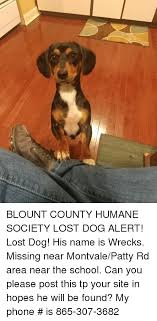Lost Dog Meme - blount county humane society lost dog alert lost dog his name is