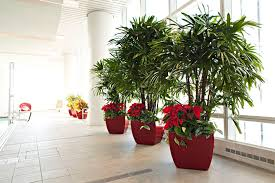 plants for office office plants and plant maintenance in atlanta plant care
