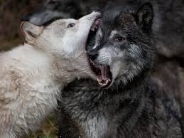 sparring wolves luke wessman self made artist luke