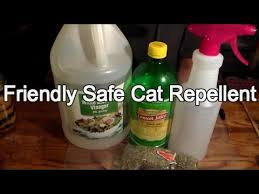 How To Keep Cats Off Outdoor Furniture by Friendly Way To Repel Cats Youtube