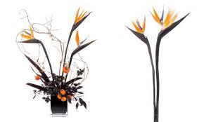 spooky bird of paradise design mellano co