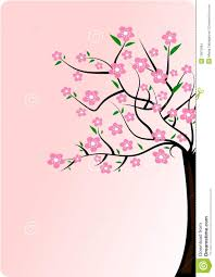 cherry blossom tree stock images image 13875994