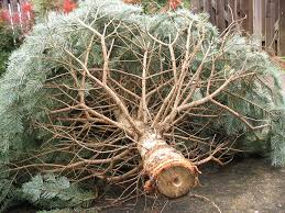 free christmas tree lights recycling offered in citrus heights