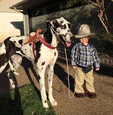 horse jockey halloween costume toddler and great dane dog halloween costume a cowboy and his