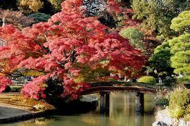 the most beautiful garden in japan rikugi en yabai the modern