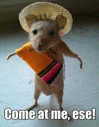 Mouse Memes - 28 very funny mouse meme pictures that will make you laugh