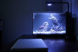 stunner led aquarium light strips beard u0027s evo 13 now with coral aquarium journals nano reef com