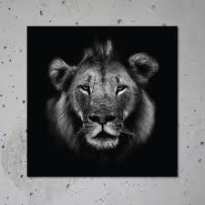 lion print wild lion jungle animal print black and white photography square
