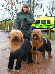 boxer dog crufts 2014 crufts competitors arrive in dogs onesies as rain hits day one of