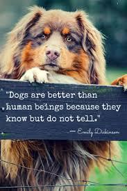 australian shepherd quotes 31 best puppy images on pinterest animals mini aussie and aussies