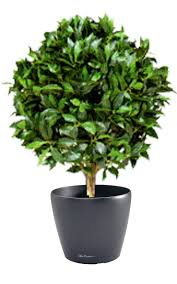 Laurel Topiary - finest quality artificial plants that look so real and natural