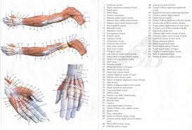 human anatomy lab resources