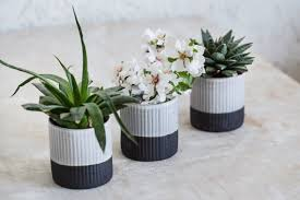 ceramic planter in black and white succulent planter modern