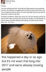 dog condolences 25 best memes about memes