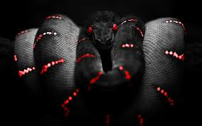black king wallpaper desktop hd black king snake images