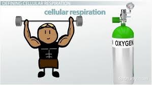 role of oxygen in cellular respiration video u0026 lesson transcript