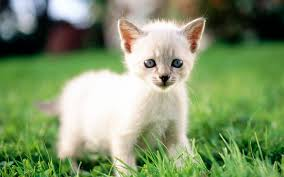 Small Beautiful Pics White Cats Are Beautiful 30 Photos Kitty Bloger