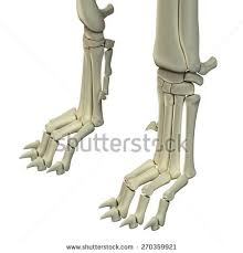 Dog Body Parts Anatomy Dog Anatomy Stock Images Royalty Free Images U0026 Vectors Shutterstock