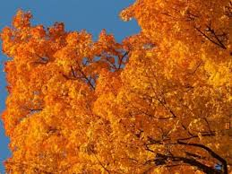 peak dates 2016 wisconsin fall foliage interactive