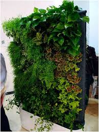 How To Build A Vertical Garden - best 25 living walls ideas on pinterest wall gardens indoor