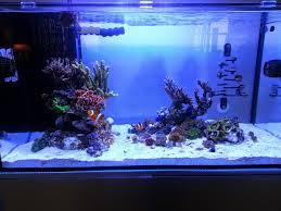 Aquascape Inspiration Metrokat 2016 Featured Reef Aquariums Nano Reef Com Community