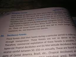 which trees can be found in evergreen forest meritnation com