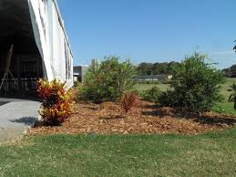 brisbane native plants native plants and contract growing mansfield brisbane nursery