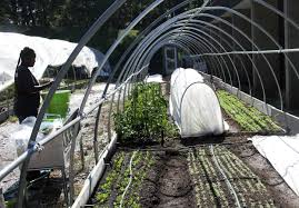 d c urban gardens bring low cost fresh produce to city u0027s food