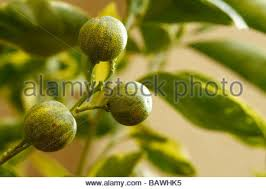 orange tree stock photos orange tree stock images alamy