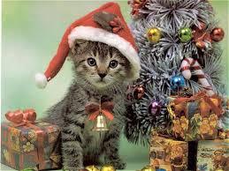 cat christmas cat wallpaper free christmas cat wallpaper