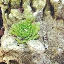 Succulent Rock Garden by Beginner U0027s Guide To Growing Succulents Garden Making