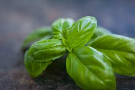 Origination Of Halloween by The History Of Basil