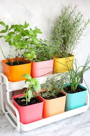 Grow Herbs Indoors by Make A Colorful Indoor Herb Garden U2013 A Beautiful Mess My Home