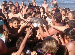 dolphin was dead before it was pulled from the water by tourists