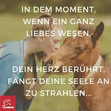 pferdesprüche 8 best pferde images on dubai animals and baby horses