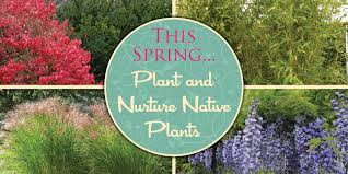illinois native plant society this spring u2026 plant and nurture native plants u2013 vivareston