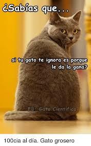 imagenes groseras de gatos csalbias que si tu gato te ignora es porque le da la gana bb gato