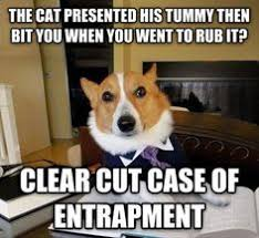 Lawyer Dog Memes - hilarious lawyer dog memes you need to see attorney client privilage