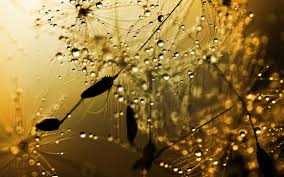 rainy weather desktop wallpaper 52dazhew gallery