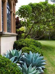 Rock Garden Bellevue by Agave Rhaphiolepis And Plumeria Bellevue Hill 4 Pinterest
