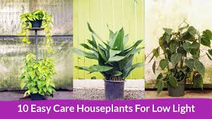 10 easy care houseplants for low light youtube